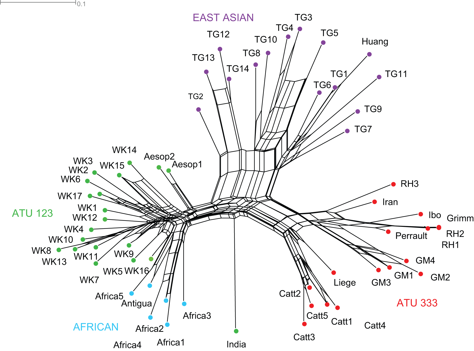 Phylogenetic network of Little Red Riding Hood (Tehrani 2013, fig. 4)